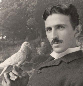 Teslas-Pigeon-love