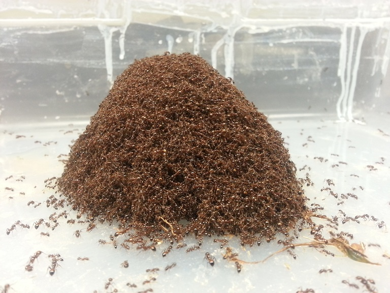 ants solid and liquid