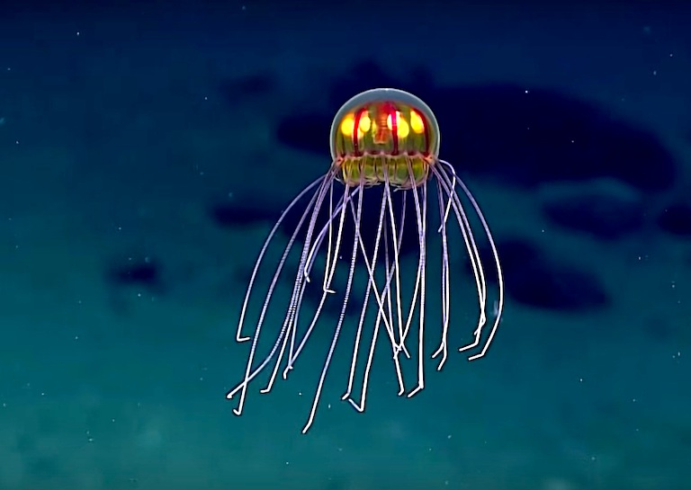 reflective colorful jellyfish