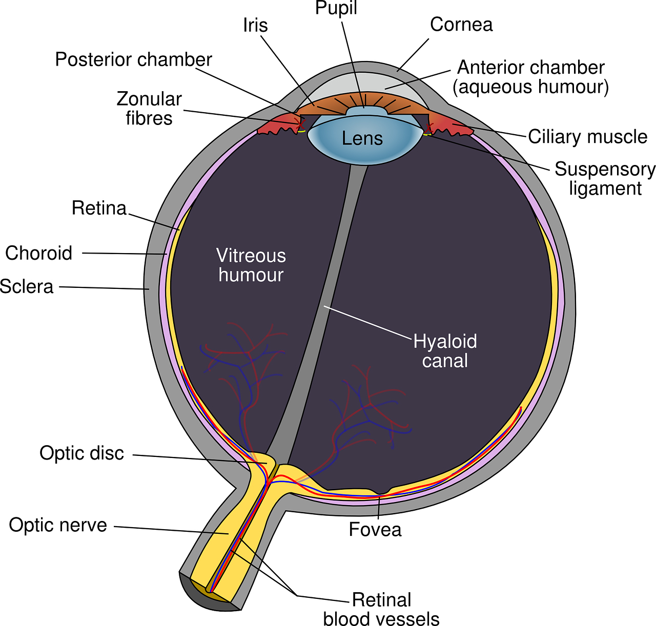 anatomy-of-eye