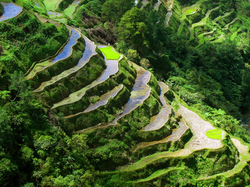 rice-terraces-banaue