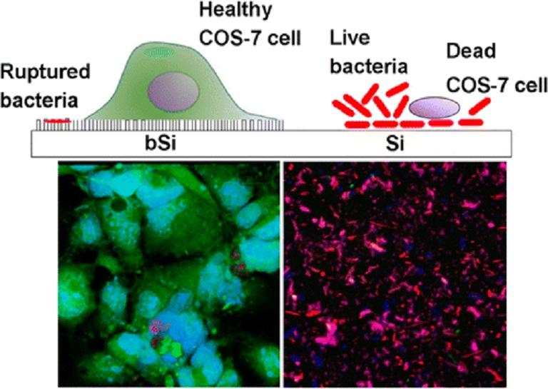 nanosurface-bacteria