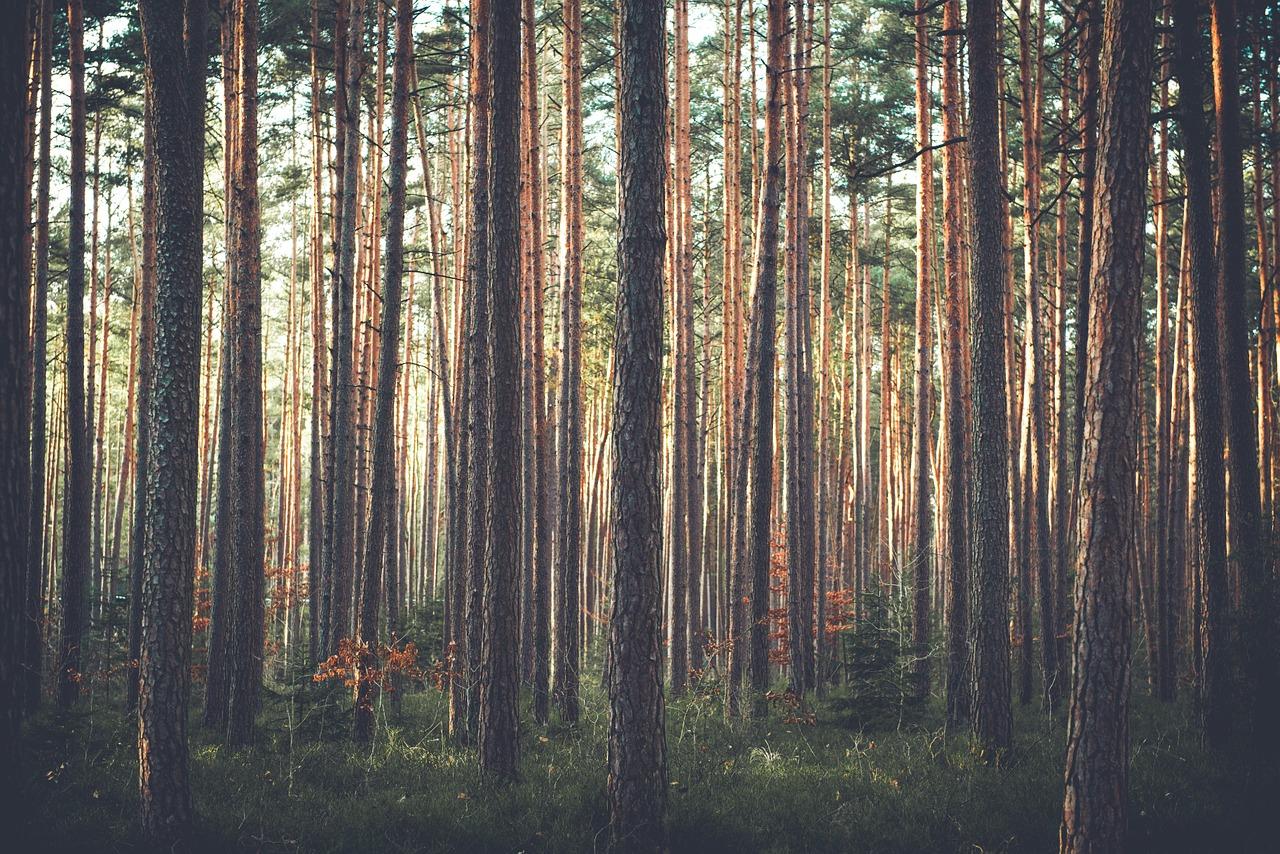 trees-1209088_1280