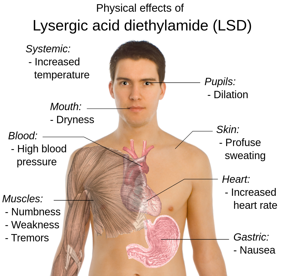 possible_physical_effects_of_lysergic_acid_diethylamide_lsd