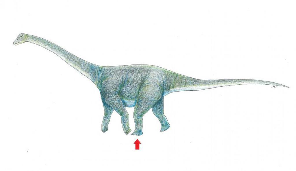 shinobu-ishigaki-dinosaur-footprint2