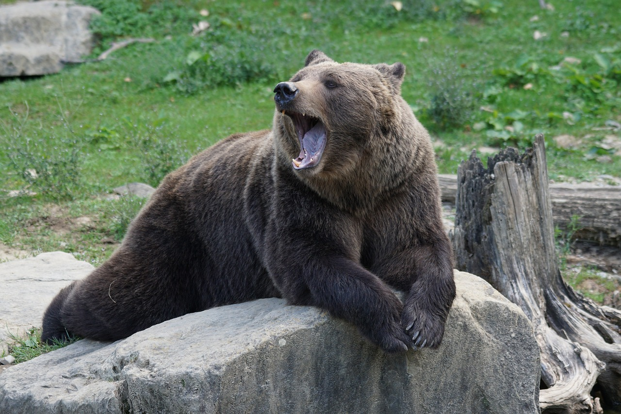 yawning-brain