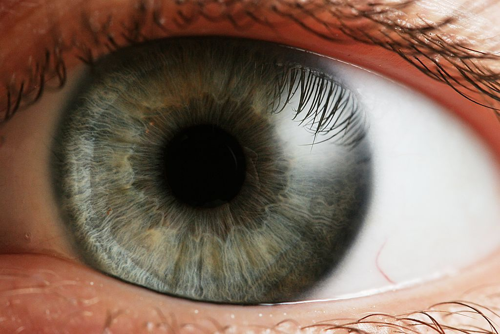 How Do You See?: The Secret of Light