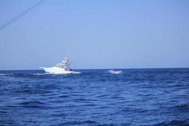 Massive Black Marlin Sinks Fishing Boat off the Gulf of Panama