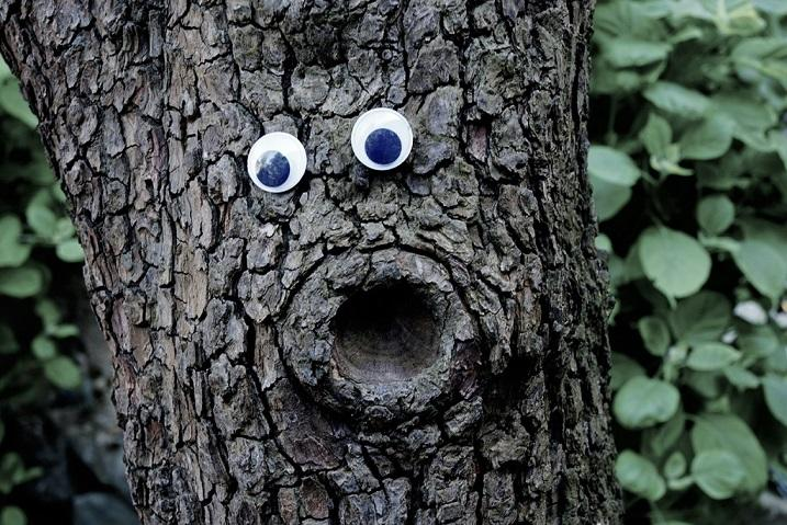 Tree with googlye eyes