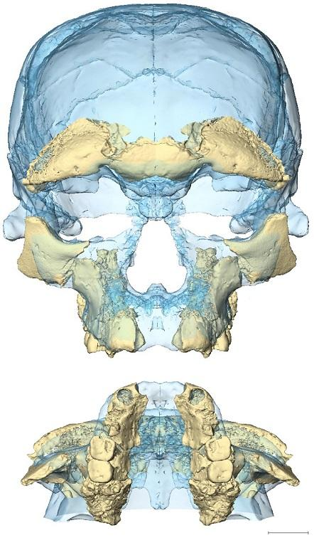 3D image of the earliest Homo sapiens
