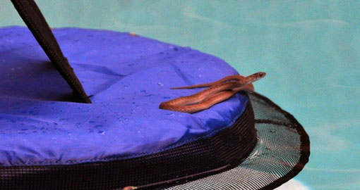Meet FrogLog: A Tiny Little Inflatable Ramp That Saves Animals from Drowning in Pools