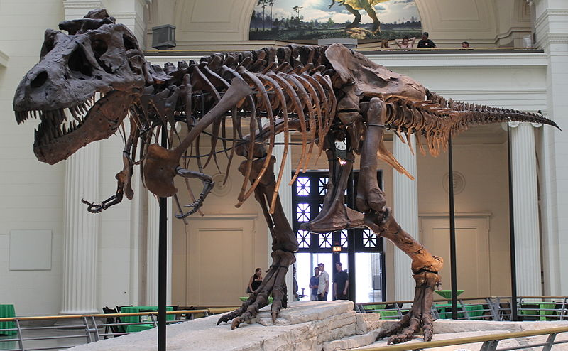 Could You Beat a T. rex in a Race?