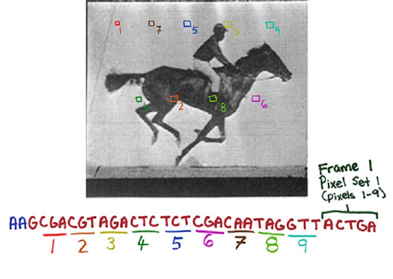 Biologists Upload Galloping Horse GIF into the DNA of Living Bacteria