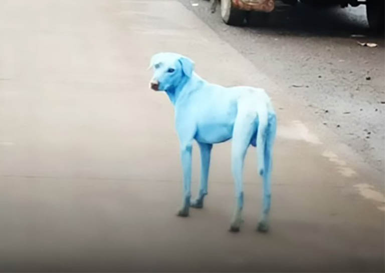 Dogs Are Turning Blue in Mumbai Because of River Pollution