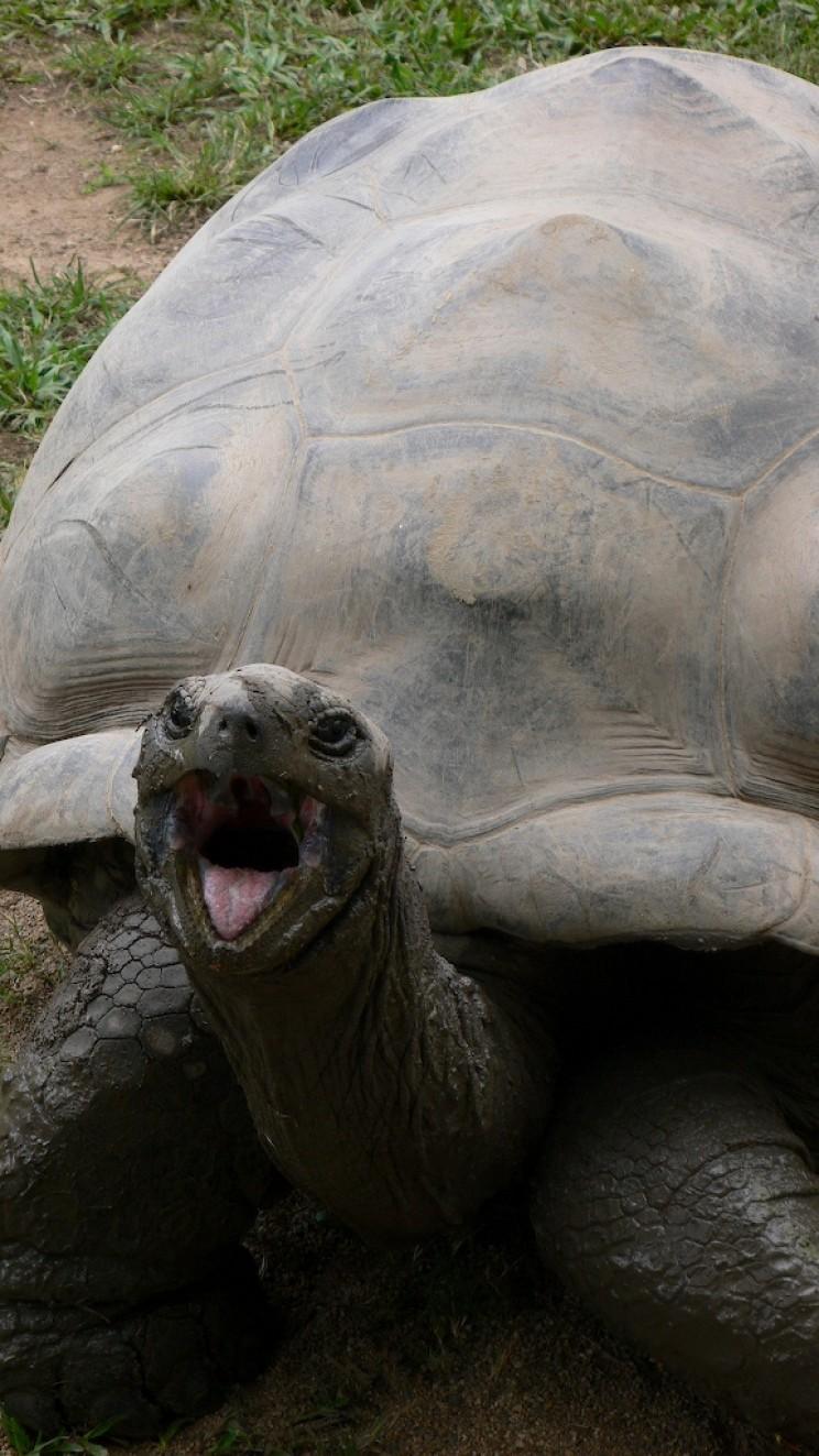 Darwin's Giant tortoise Harriet