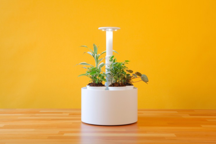 Grow Indoor Plants the Smarter Way with Plantone