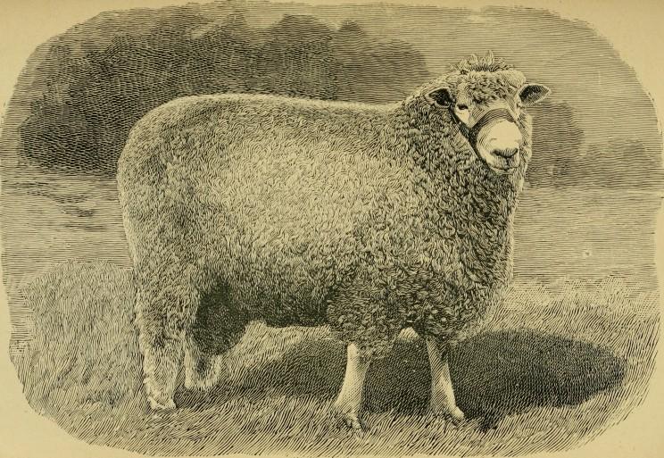 Stanford Scientists Develop World's First Human-Sheep Hybrid