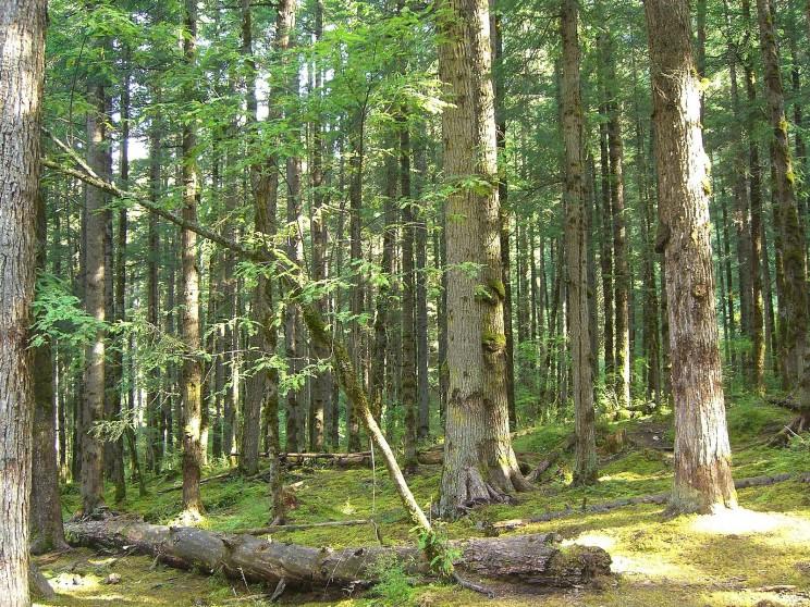 shishuan forest