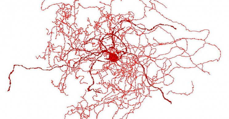 Scientists Discovered A New Type of Brain Cell That May Only Exist in Humans
