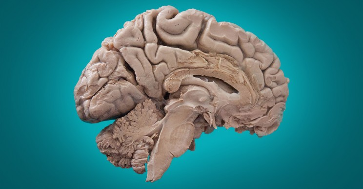 Neuroscientists Report The Discovery of New Region of the Human Brain