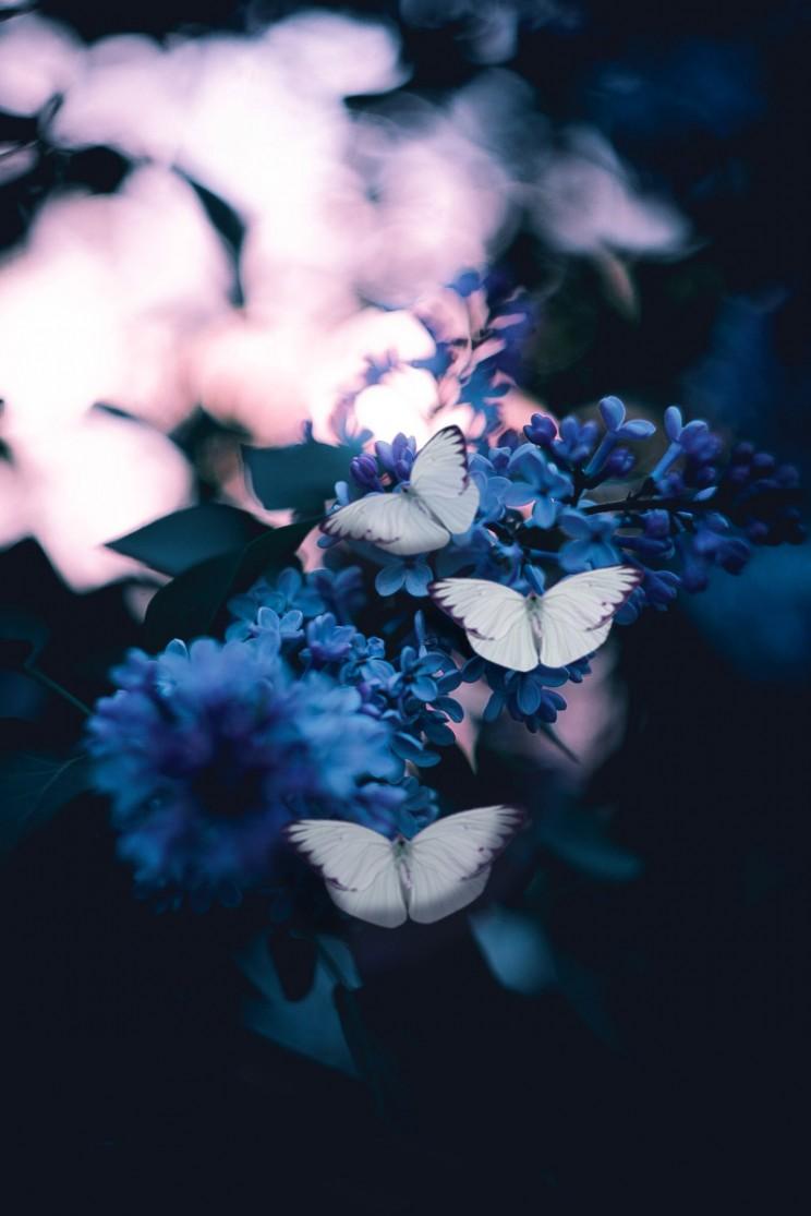 The Butterfly Effect wings