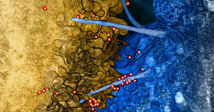 Breakthrough HIV Vaccine Set to Start Human Trials in 2019