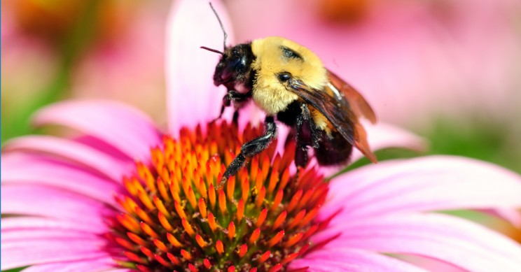 Honeybee Vaccine Saves the Sweet Life