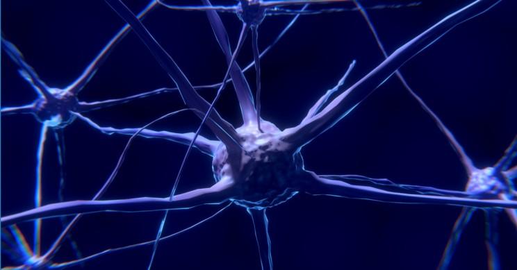 New Study Provides Insight Into Neuron Communication Patterns