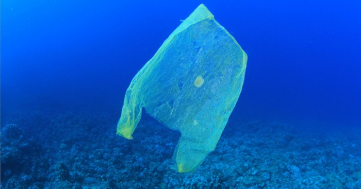 Plastic Invasion Reaches to the World's Deepest Ocean Trench