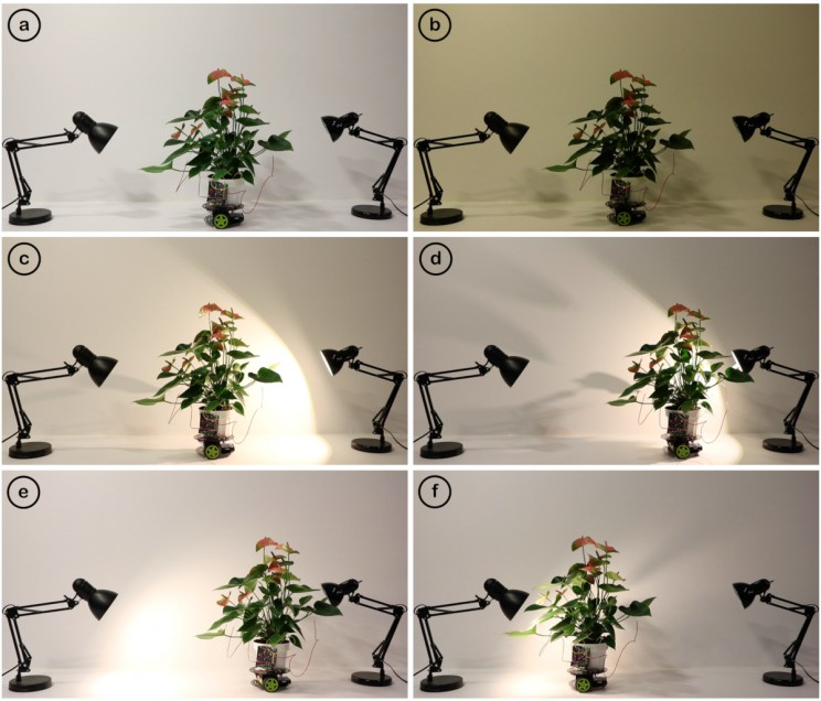MIT Researchers Develop a Cyborg Houseplant That Goes After the Light