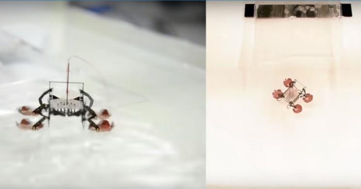 Scientists Crack Framework to Control Leg Movement of MicroRobots