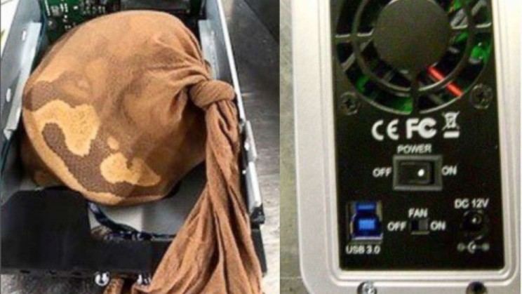 Smuggler Attempts to Sneak Python On Plane in a Hard Drive