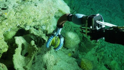 This Soft Robotic Arm Allows Exploring the Delicate Sea Life Without Any Harm