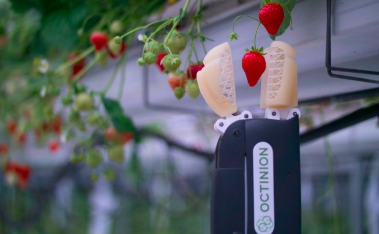 This Belgian Robot Could be the Future of Picking Supermarket Strawberries