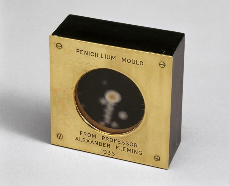 Sample of penicillin mould presented by Alexander Fleming to Douglas Macleod, 1935, Science Museum Group Collection, London