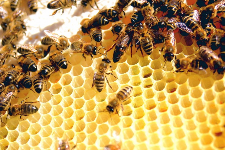 Bee colonies are disappearing, be prepared to save them.