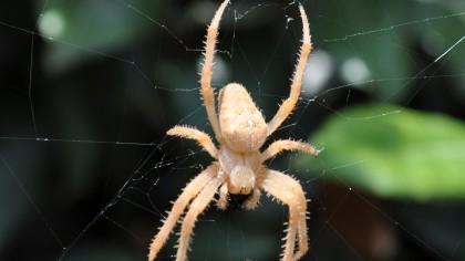 Spider Sculpts Large Decoy Spiders