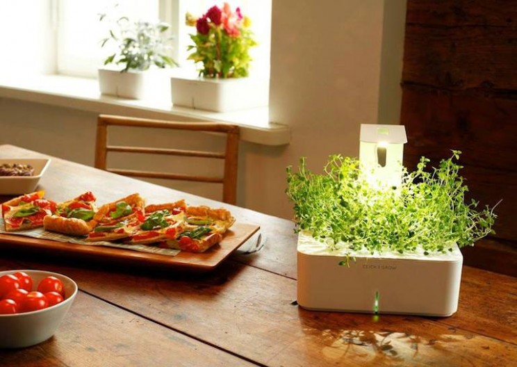 Grow Your Own Veggies at Home with One Click