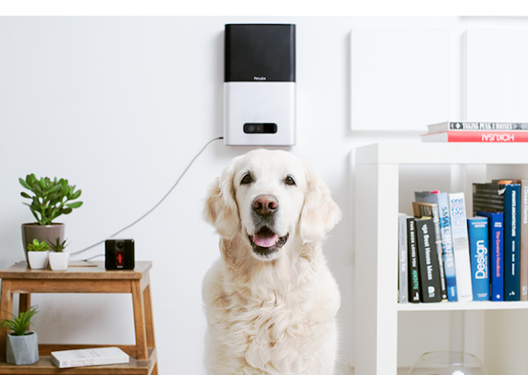 Remote Pet Camera Lets You Play with Your Pet While You're Away