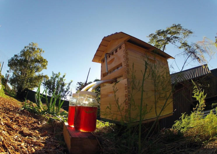 This New Beekeeping System is Totally Buzzworthy
