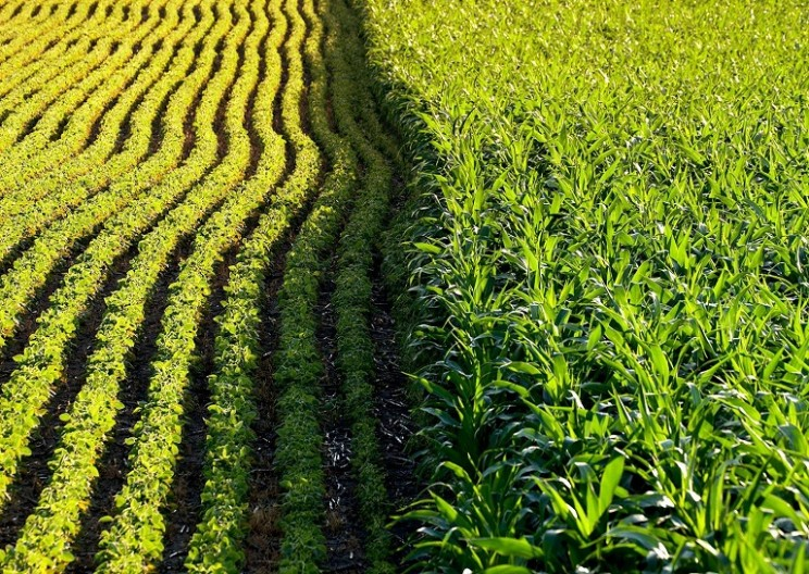 Largest Study of GM Crops Yield Surprising Results