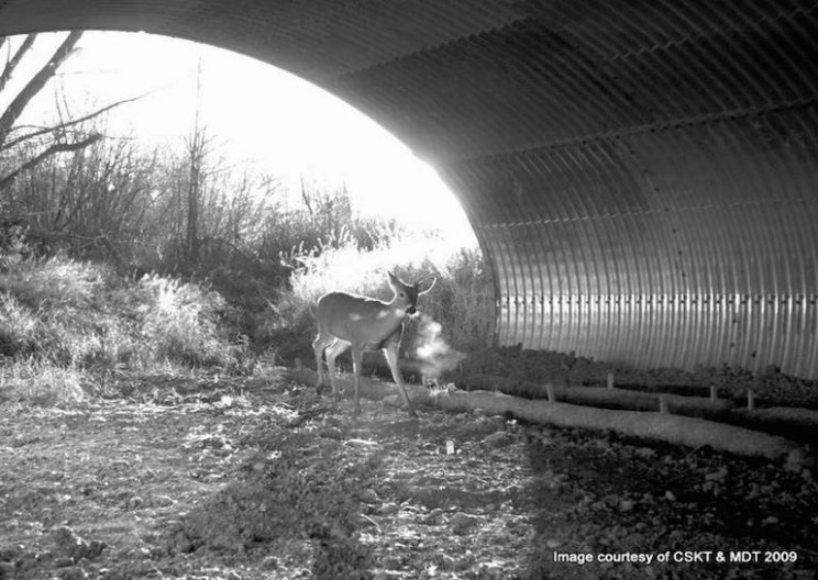 Highway 93 in Nevada Holds More Than 40 Wildlife Crossings