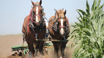 Why Do We Still Use Horsepower?