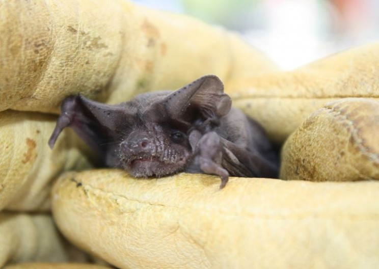 One Tiny Bat Defied Nature to Become the World's Fastest Flier