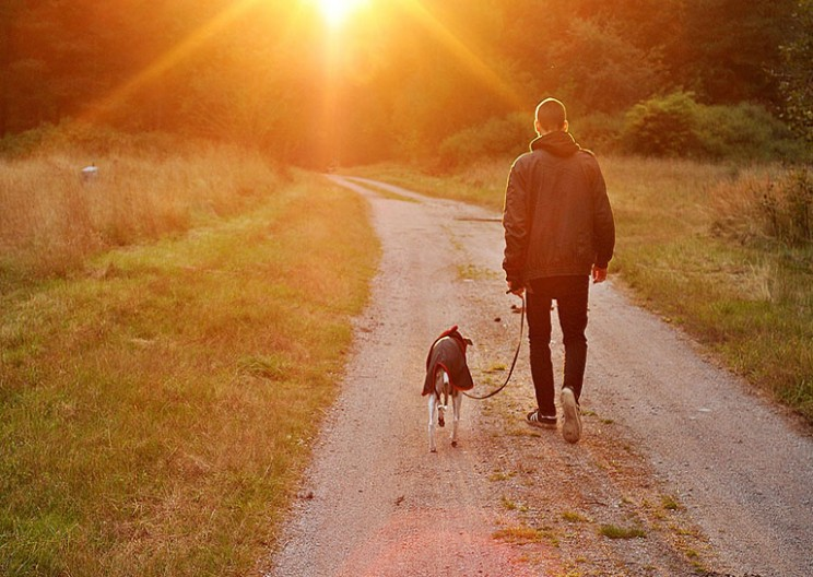 Scientists Find the Gene That Makes Dogs Man's Best Friend