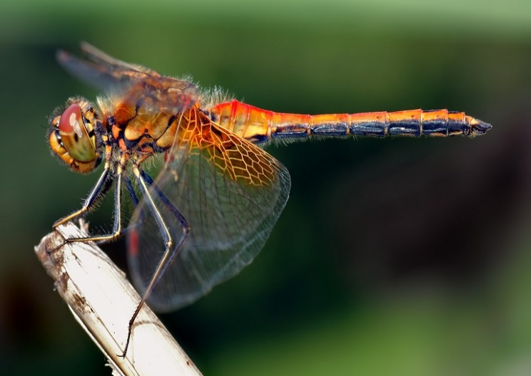 Insect-Inspired Wind Turbines Offer 35% More Efficiency