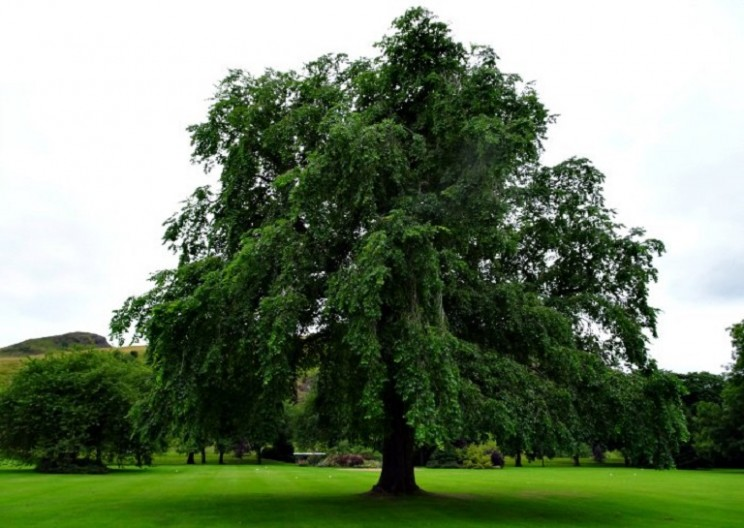 Hiding in Plain Sight: 'Extinct' Trees Found in Royal Garden