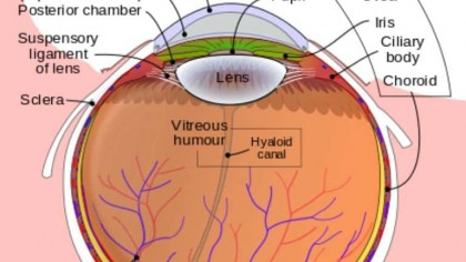 New Bionic Eye Could Return Sight to the Blind