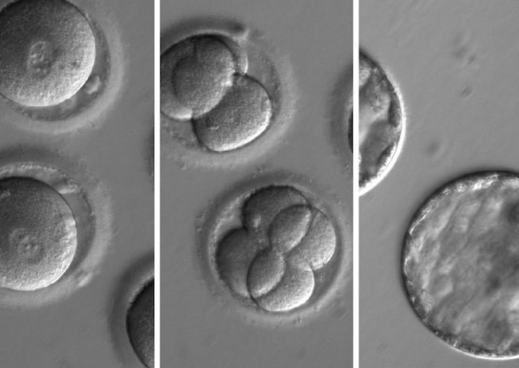 This Breakthrough In Gene-Editing Could Potentially Enhance Humanity's Future
