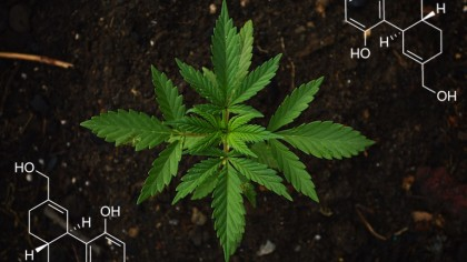 Marijuana from an Engineering Perspective: What's Really Going On?